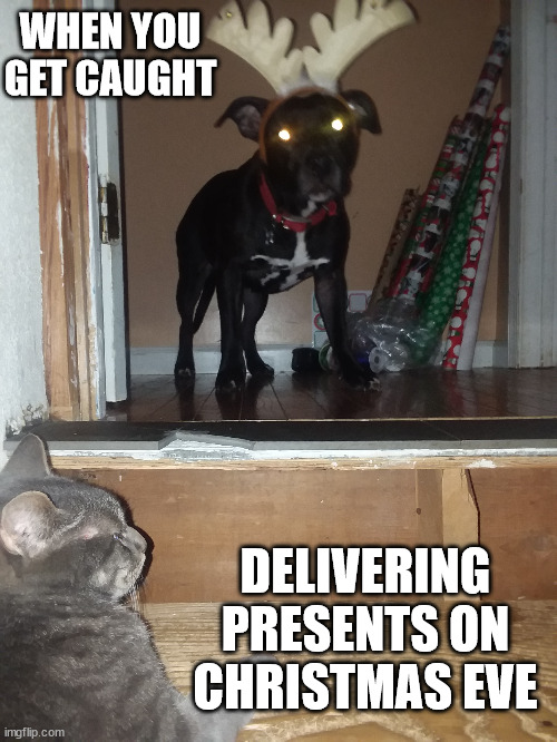 WHEN YOU GET CAUGHT; DELIVERING PRESENTS ON CHRISTMAS EVE | image tagged in dog,cat,reindeer,christmas,presents | made w/ Imgflip meme maker