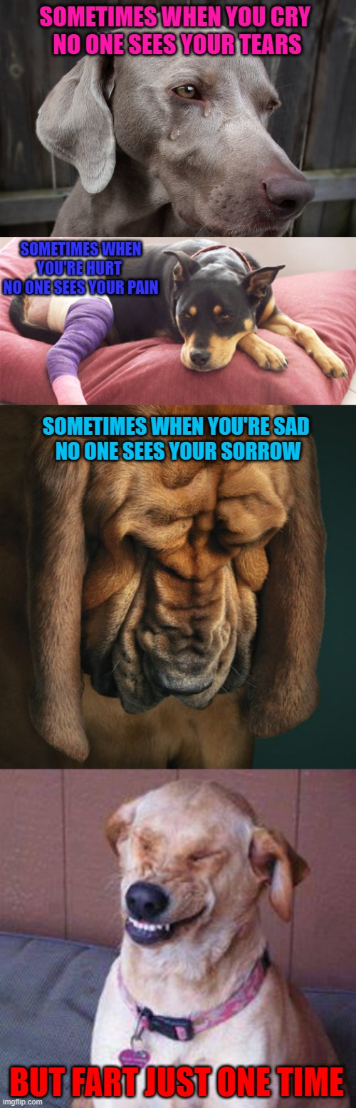 He who smelt it dealt it!!! |  SOMETIMES WHEN YOU CRY  NO ONE SEES YOUR TEARS; SOMETIMES WHEN YOU'RE HURT  NO ONE SEES YOUR PAIN; SOMETIMES WHEN YOU'RE SAD  NO ONE SEES YOUR SORROW; BUT FART JUST ONE TIME | image tagged in funny dog,memes,dogs,funny,fart,animals | made w/ Imgflip meme maker