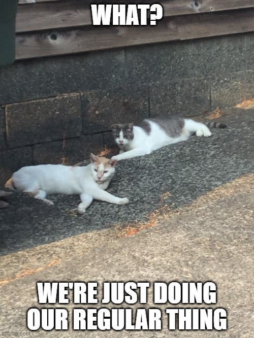 """We're just doing our regular thing"" 