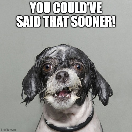 Wet dog | YOU COULD'VE SAID THAT SOONER! | image tagged in wet dog | made w/ Imgflip meme maker