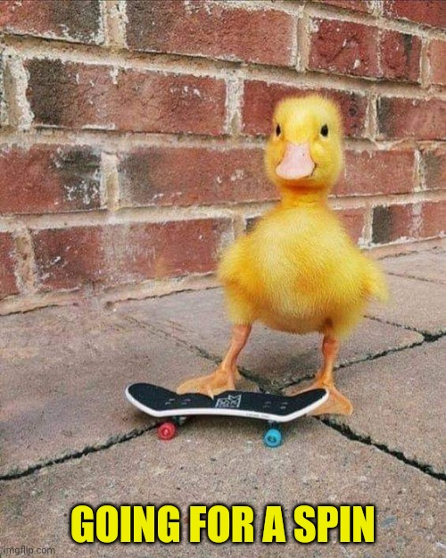GOING FOR A SPIN | image tagged in ducky | made w/ Imgflip meme maker