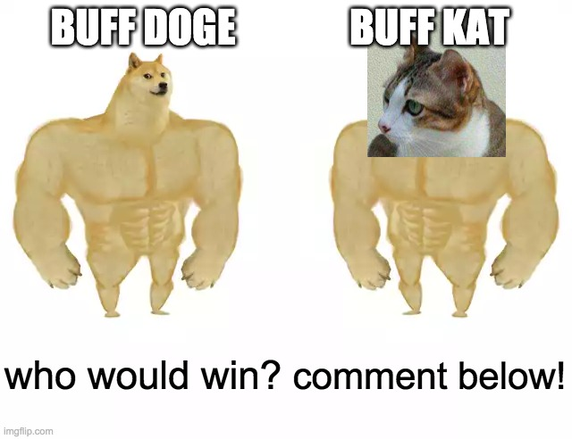 Buff Doge vs Buff Doge |  BUFF DOGE; BUFF KAT; who would win? comment below! | image tagged in buff doge vs buff doge | made w/ Imgflip meme maker