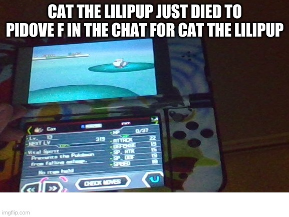 Didn't quite pay attention to the damage |  CAT THE LILIPUP JUST DIED TO PIDOVE F IN THE CHAT FOR CAT THE LILIPUP | made w/ Imgflip meme maker