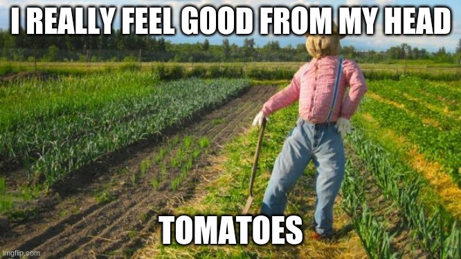 Scarecrow |  I REALLY FEEL GOOD FROM MY HEAD; TOMATOES | image tagged in scarecrow in field | made w/ Imgflip meme maker