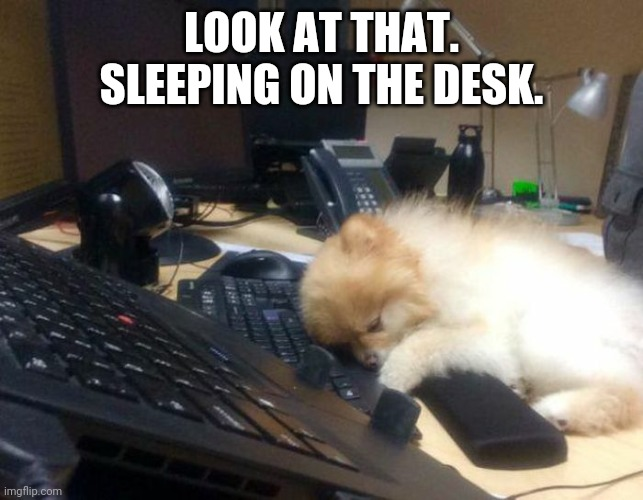 Wow. So adorable! |  LOOK AT THAT. SLEEPING ON THE DESK. | image tagged in cute,aww,animals,pets | made w/ Imgflip meme maker