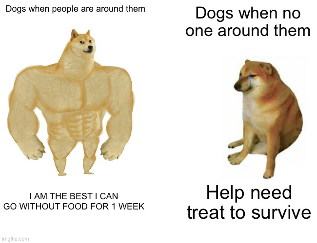 Buff Doge vs. Cheems Meme |  Dogs when people are around them; Dogs when no one around them; I AM THE BEST I CAN GO WITHOUT FOOD FOR 1 WEEK; Help need treat to survive | image tagged in memes,buff doge vs cheems | made w/ Imgflip meme maker