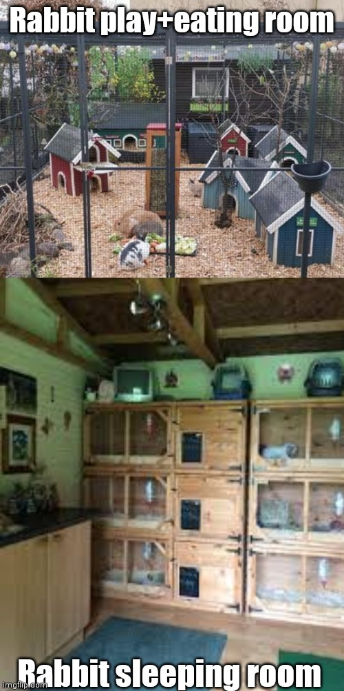 I'll drop off OJ and Hoppy :) |  Rabbit play+eating room; Rabbit sleeping room | image tagged in rabbits | made w/ Imgflip meme maker