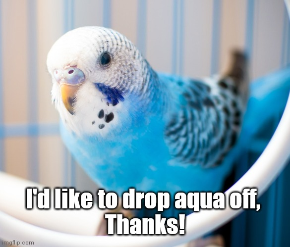 I'd like to drop aqua off,  Thanks! | image tagged in bird,daycare | made w/ Imgflip meme maker