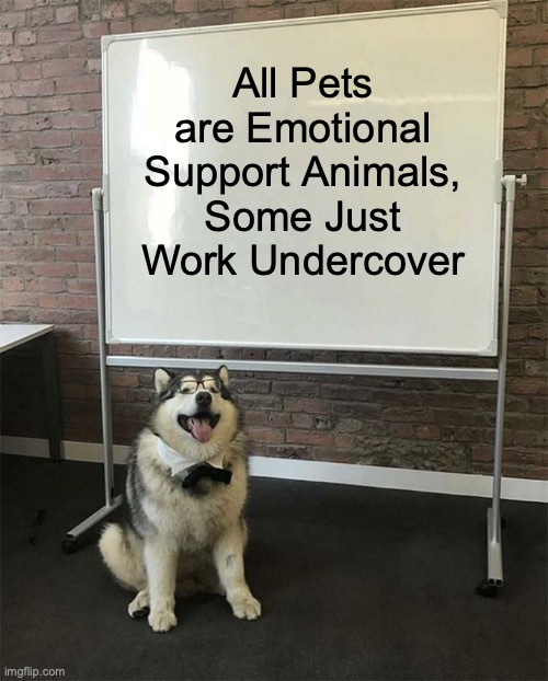 Who's a Good Boy? |  All Pets are Emotional Support Animals, Some Just Work Undercover | image tagged in how to be a good boy | made w/ Imgflip meme maker
