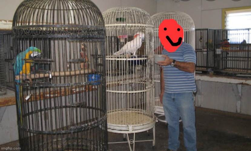 Here is the bird room so UAWormindisguise can drop off Aqua | image tagged in birds | made w/ Imgflip meme maker