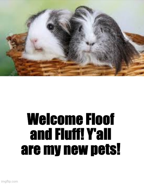 I adopted Floof and Fluff to be my pets :) |  Welcome Floof and Fluff! Y'all are my new pets! | image tagged in blank white template | made w/ Imgflip meme maker