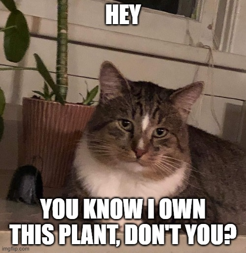 """You know I own this plant"" 