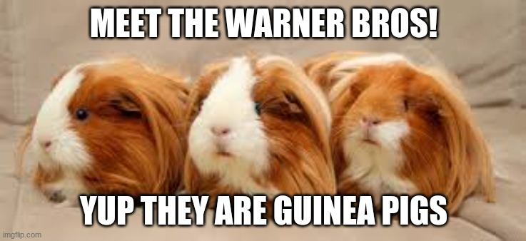 Meet the Warner Bros! |  MEET THE WARNER BROS! YUP THEY ARE GUINEA PIGS | image tagged in the warner bros | made w/ Imgflip meme maker