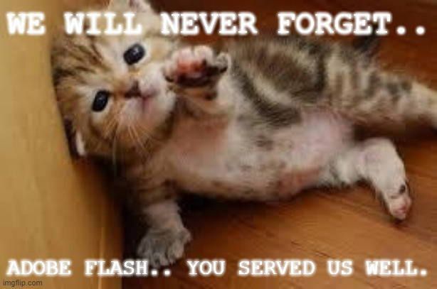 Goodbye.. my good friend.. goodbye. |  WE WILL NEVER FORGET.. ADOBE FLASH.. YOU SERVED US WELL. | image tagged in sad kitten goodbye | made w/ Imgflip meme maker