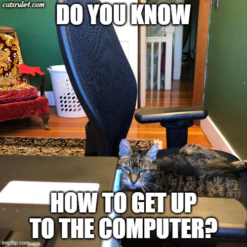 """Do you know how to get up to the computer?"" 