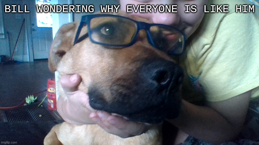 glasses dog | BILL WONDERING WHY EVERYONE IS LIKE HIM | image tagged in glasses dog | made w/ Imgflip meme maker