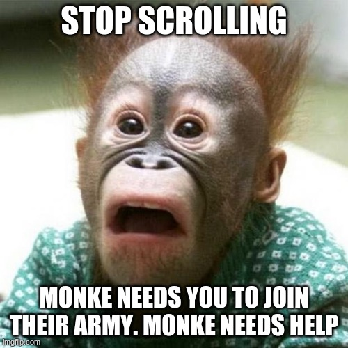join |  STOP SCROLLING; MONKE NEEDS YOU TO JOIN THEIR ARMY. MONKE NEEDS HELP | image tagged in shocked monkey | made w/ Imgflip meme maker