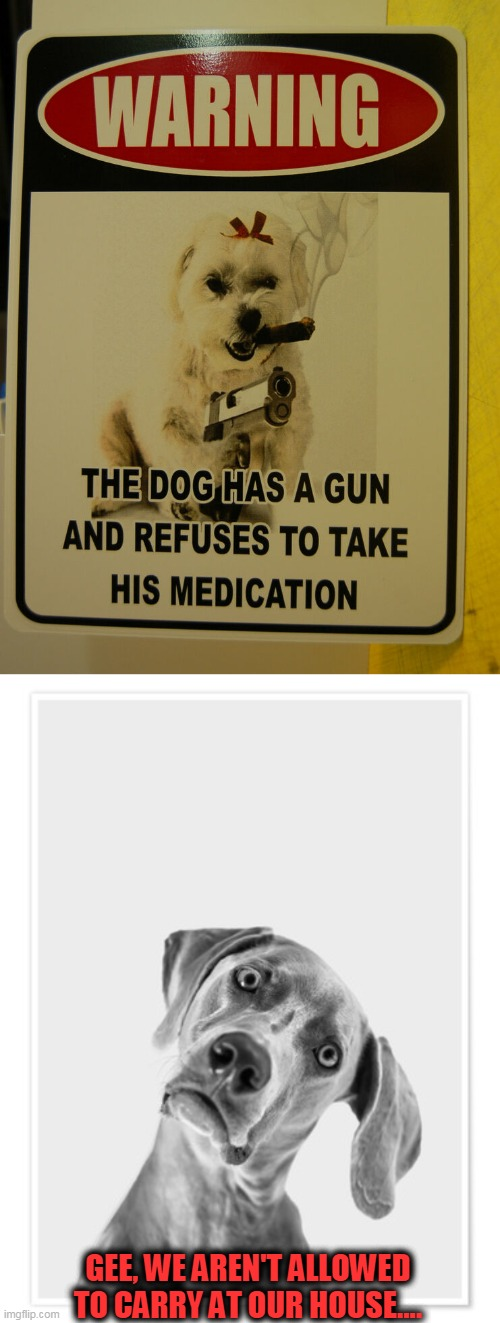 Be Sure to Knock Before Entering.... |  GEE, WE AREN'T ALLOWED TO CARRY AT OUR HOUSE.... | image tagged in fun,cute dog,funny signs | made w/ Imgflip meme maker