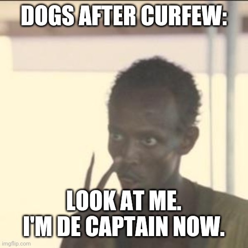 Quebec curfew by Francois Legault dog loophole |  DOGS AFTER CURFEW:; LOOK AT ME. I'M DE CAPTAIN NOW. | image tagged in memes,look at me,doug ford,ontario,canadian politics | made w/ Imgflip meme maker