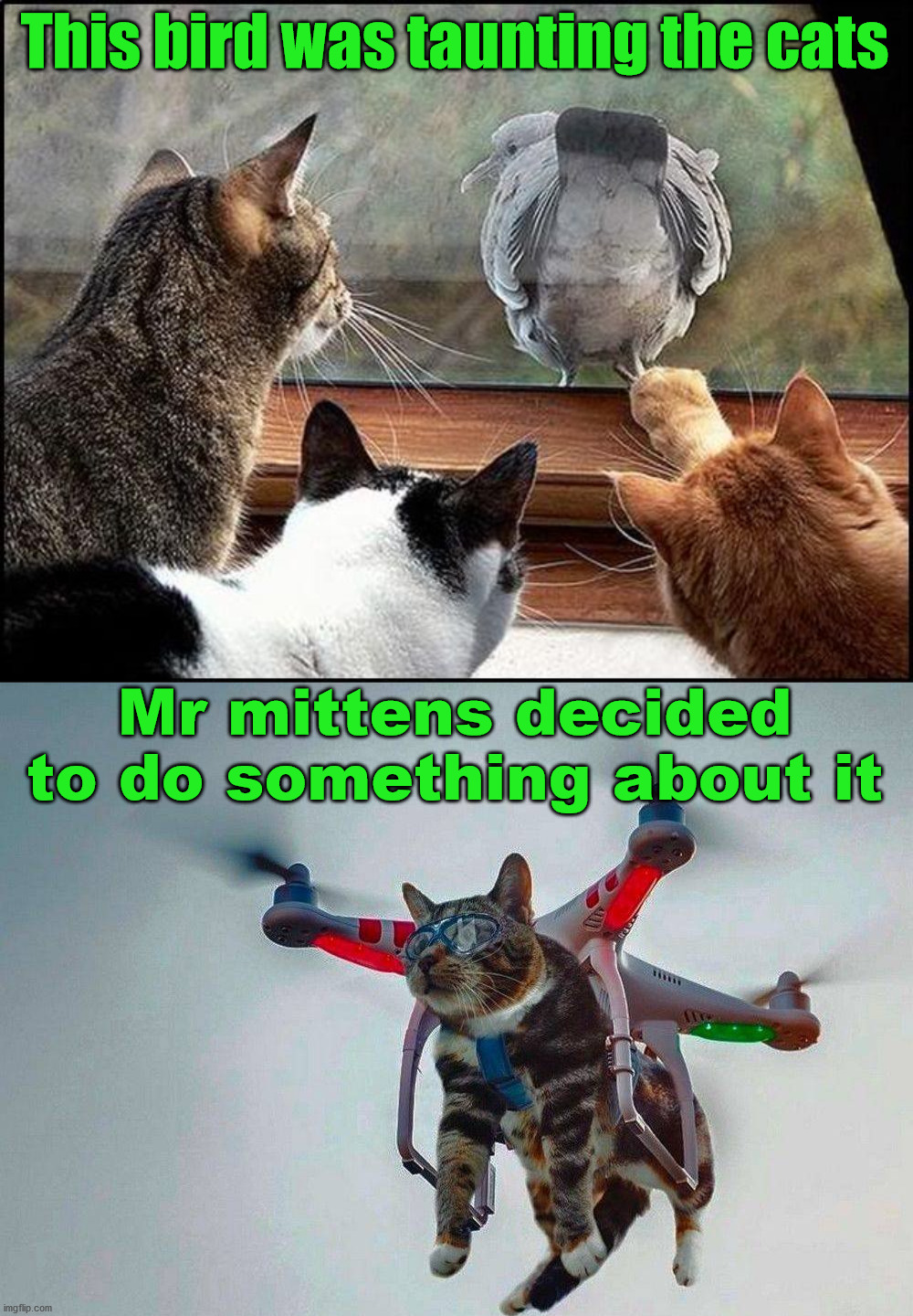 So who is flying the drone? |  This bird was taunting the cats; Mr mittens decided to do something about it | image tagged in cats,french taunting in monty python's holy grail,birds,drone | made w/ Imgflip meme maker