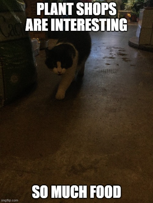 """Plant shops are interesting"" 