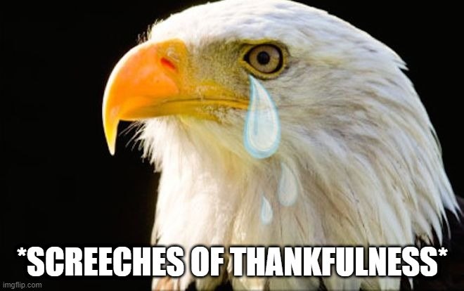 God bless America  |  *SCREECHES OF THANKFULNESS* | image tagged in god bless america,thankful,eagle,joy,tears of joy,happy | made w/ Imgflip meme maker