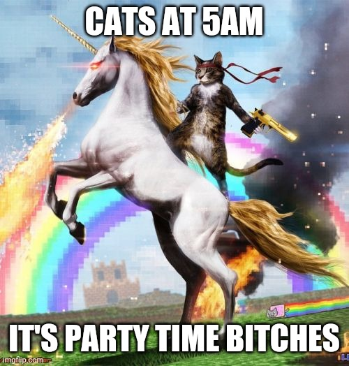 Please just be quiet. Mrrroowwwwwwwwwww |  CATS AT 5AM; IT'S PARTY TIME BITCHES | image tagged in memes,welcome to the internets,cats,funny cats,shut up | made w/ Imgflip meme maker