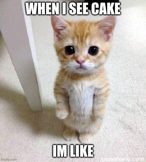 Cute Cat Meme |  WHEN I SEE CAKE; IM LIKE | image tagged in memes,cute cat | made w/ Imgflip meme maker