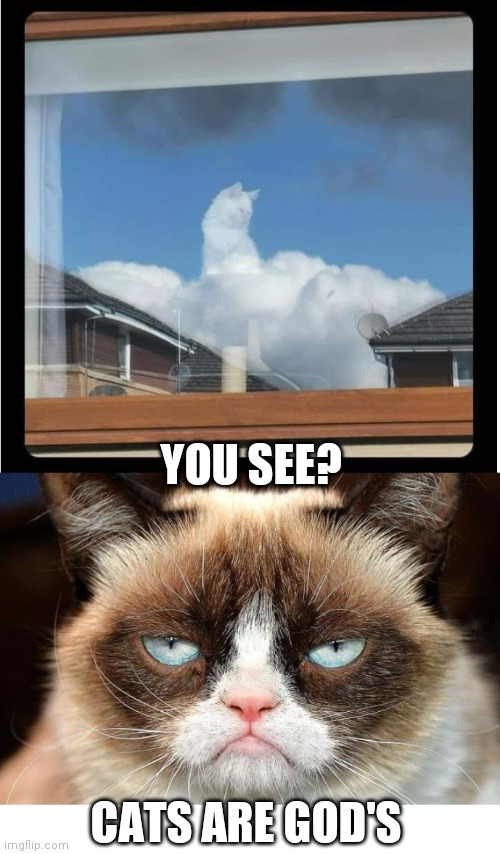 GRUMPY SAYS SO |  YOU SEE? CATS ARE GOD'S | image tagged in memes,grumpy cat not amused,cats,funny cats | made w/ Imgflip meme maker