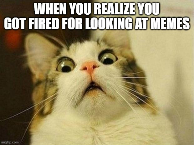 Scared Cat Meme |  WHEN YOU REALIZE YOU GOT FIRED FOR LOOKING AT MEMES | image tagged in memes,scared cat | made w/ Imgflip meme maker