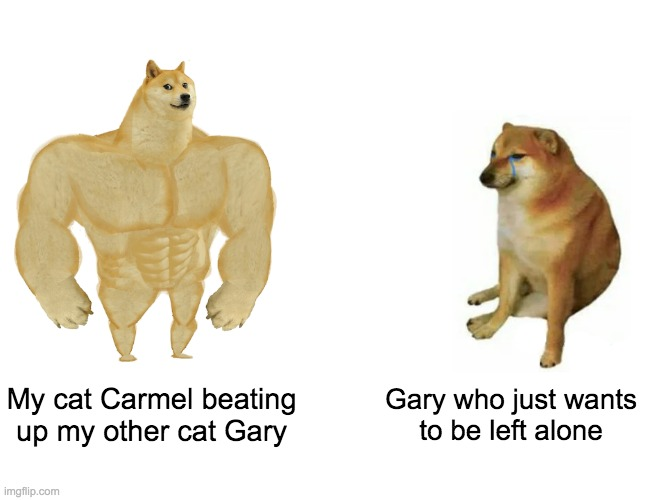 rip |  My cat Carmel beating up my other cat Gary; Gary who just wants to be left alone | image tagged in memes,buff doge vs cheems | made w/ Imgflip meme maker