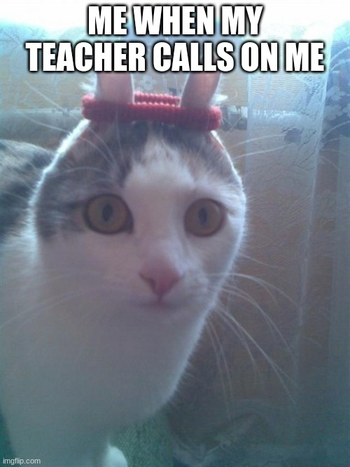 scrunch cat |  ME WHEN MY TEACHER CALLS ON ME | image tagged in surprised scrunchy cat | made w/ Imgflip meme maker