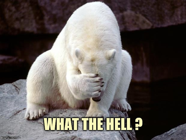 Polar Bear | WHAT THE HELL ? | image tagged in polar bear | made w/ Imgflip meme maker