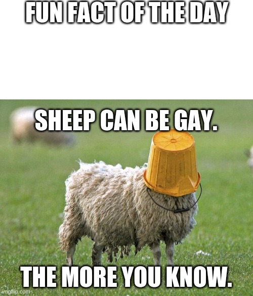 Who knew? (also how did we find out?) |  FUN FACT OF THE DAY; SHEEP CAN BE GAY. THE MORE YOU KNOW. | image tagged in stupid sheep,gay | made w/ Imgflip meme maker