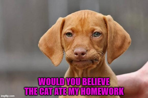 WOULD YOU BELIEVE THE CAT ATE MY HOMEWORK | made w/ Imgflip meme maker
