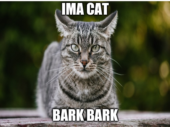 cats |  IMA CAT; BARK BARK | image tagged in cat | made w/ Imgflip meme maker