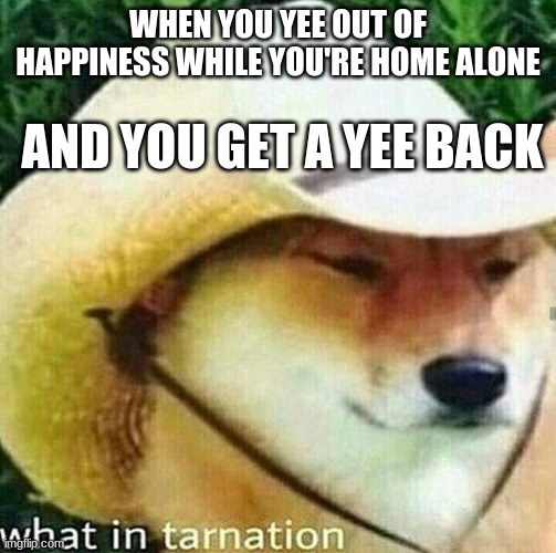 Southern Ghost |  WHEN YOU YEE OUT OF HAPPINESS WHILE YOU'RE HOME ALONE; AND YOU GET A YEE BACK | image tagged in what in tarnation dog | made w/ Imgflip meme maker