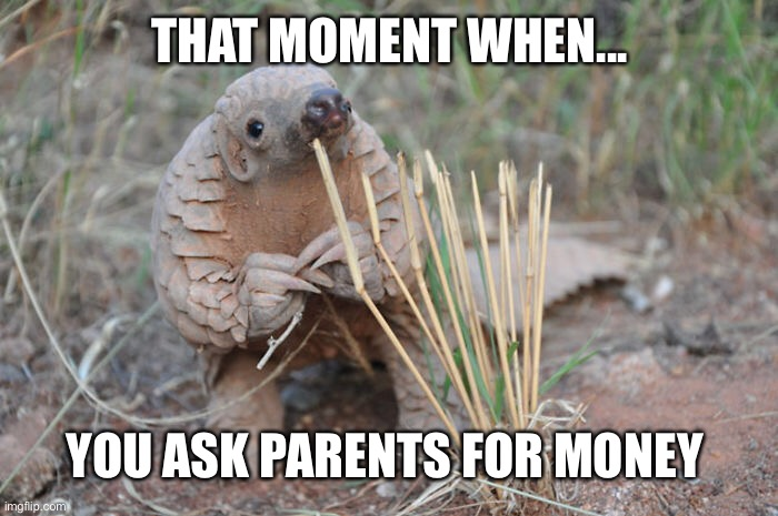Ask for money |  THAT MOMENT WHEN... YOU ASK PARENTS FOR MONEY | image tagged in cute animals,money,parents | made w/ Imgflip meme maker