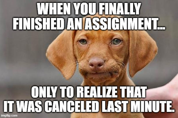 Canceled Homework |  WHEN YOU FINALLY FINISHED AN ASSIGNMENT... ONLY TO REALIZE THAT IT WAS CANCELED LAST MINUTE. | image tagged in dissapointed puppy | made w/ Imgflip meme maker