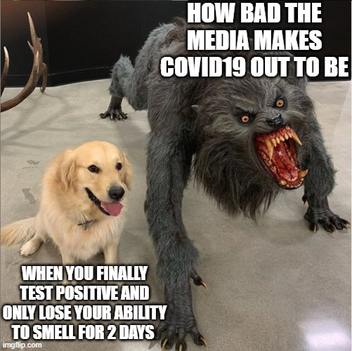 Covid Truth |  HOW BAD THE MEDIA MAKES COVID19 OUT TO BE; WHEN YOU FINALLY TEST POSITIVE AND ONLY LOSE YOUR ABILITY TO SMELL FOR 2 DAYS | image tagged in dog vs werewolf,covid-19,covid19,coronavirus,scammers | made w/ Imgflip meme maker