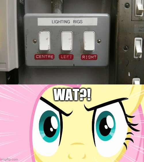 Wtf?! |  WAT?! | image tagged in fluttershy's stare mlp,you had one job,funny,how the turntables,task failed successfully,memes | made w/ Imgflip meme maker