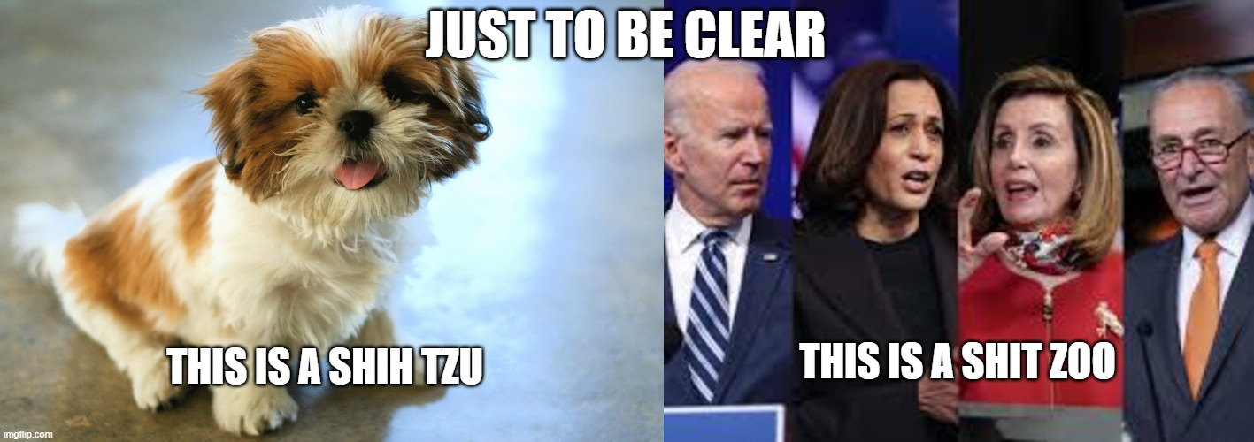 Joe Biden |  JUST TO BE CLEAR; THIS IS A SHIH TZU; THIS IS A SHIT ZOO | image tagged in nancy pelosi,kamala harris,2021,memes,pandemic,joe biden | made w/ Imgflip meme maker