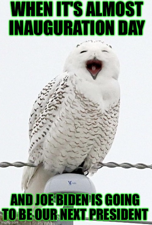 Happy owl for Joe Biden inauguration day snowy owl |  WHEN IT'S ALMOST INAUGURATION DAY; AND JOE BIDEN IS GOING TO BE OUR NEXT PRESIDENT | image tagged in happy owl,joe biden,inauguration,meme,memes,snowy owl | made w/ Imgflip meme maker