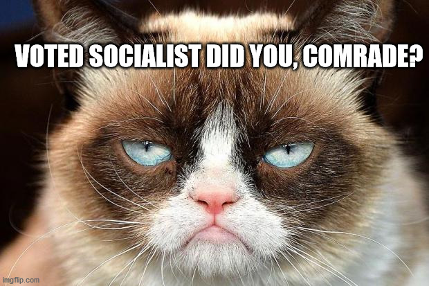 Grumpy Cat Not Amused |  VOTED SOCIALIST DID YOU, COMRADE? | image tagged in memes,grumpy cat not amused,grumpy cat | made w/ Imgflip meme maker