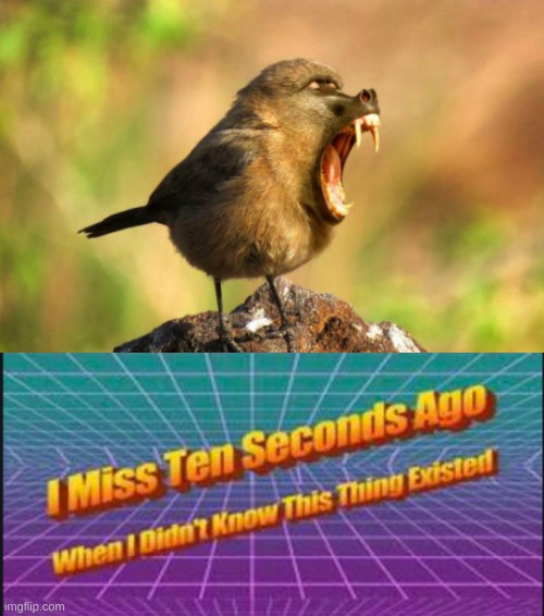 Baboon Sparrow... i think... comment what you think it is | image tagged in i miss ten seconds ago when i didn't know this thing existed,funny,memes,funny memes,baboon,birds | made w/ Imgflip meme maker