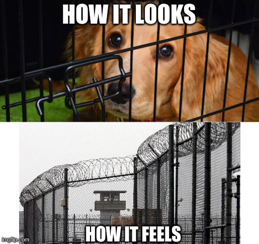 how it looks vrs how it feels |  HOW IT LOOKS; HOW IT FEELS | image tagged in dogs,prison,sad,depression | made w/ Imgflip meme maker