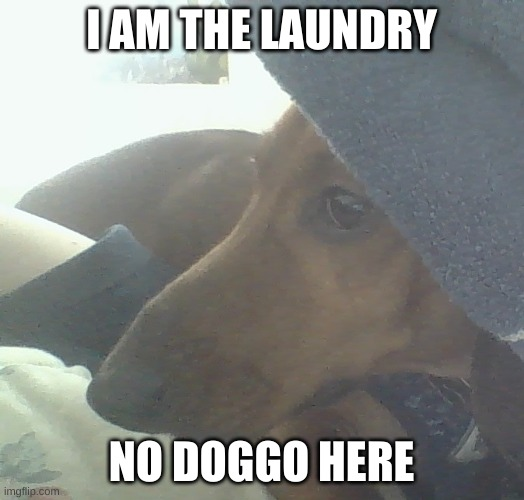 laundry doggy |  I AM THE LAUNDRY; NO DOGGO HERE | image tagged in laundry doggy | made w/ Imgflip meme maker