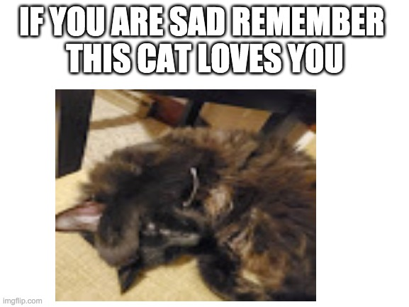 This cat loves you |  IF YOU ARE SAD REMEMBER  THIS CAT LOVES YOU | image tagged in cute cat,remember,don't worry be happy,be happy | made w/ Imgflip meme maker