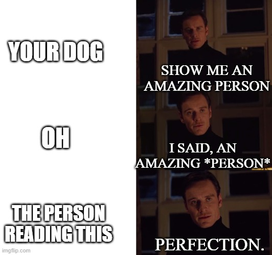 :3 |  YOUR DOG; SHOW ME AN AMAZING PERSON; OH; I SAID, AN AMAZING *PERSON*; THE PERSON READING THIS; PERFECTION. | image tagged in perfection | made w/ Imgflip meme maker