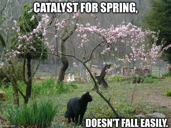 Catalyst |  CATALYST FOR SPRING, DOESN'T FALL EASILY. | image tagged in black cat,spring,fall,bad pun | made w/ Imgflip meme maker